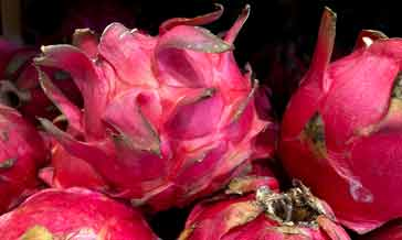 A red pitaya fruit after which the company is named